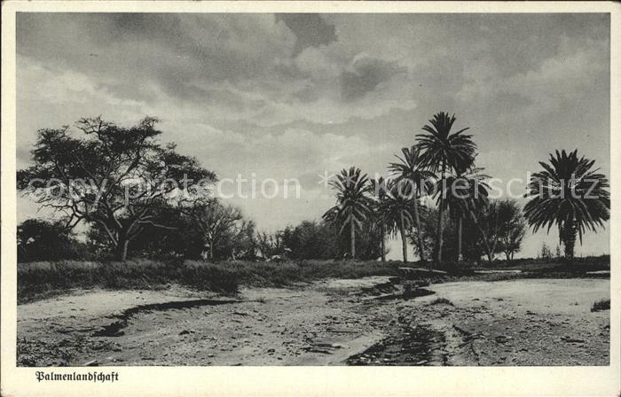 Afrika Africa Afrique Volksleben Typen Palmenlandschaft Kat. Niger