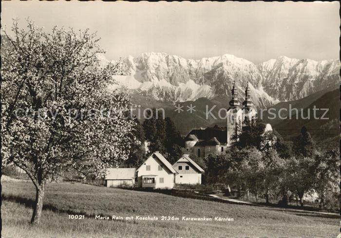 Maria Rain Kaernten mit Koschuta Karawanken Baumbluete Kirche