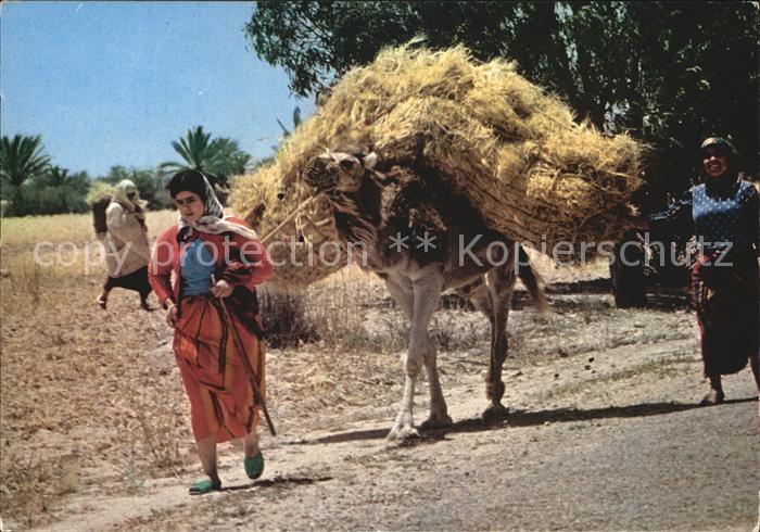Kerkennah La Moisson Kat. Tunesien