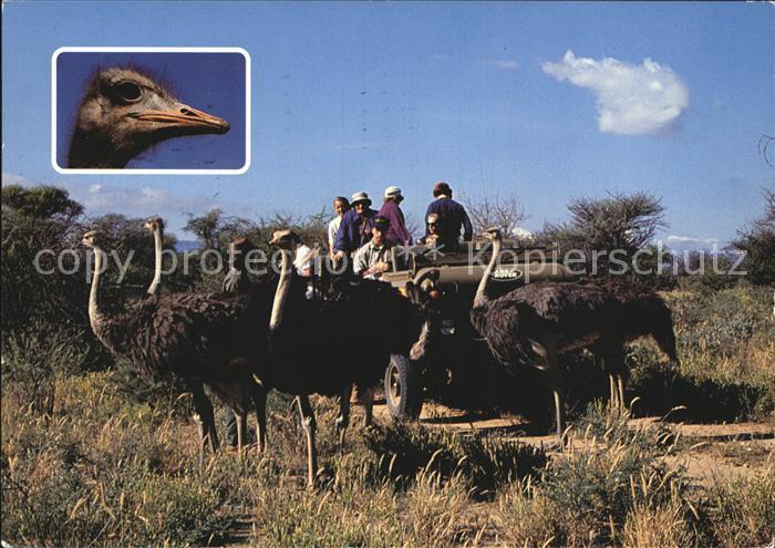 Windhuk Safari Strauss Kat. Windhoek