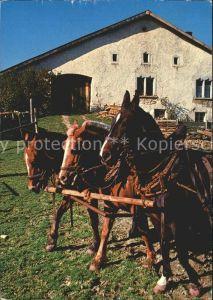 Teufen Mittelland In den Freibergen Pferdegespann Kat. Teufen