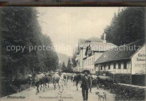Friedrichroda Heimziehende Kuhherde Kat. Friedrichroda