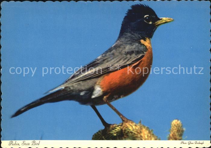 Michigan Robin State Bird Kat. Michigan