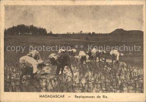 Madagascar Repiqueuses de riz Reisfelder Kat. Madagascar