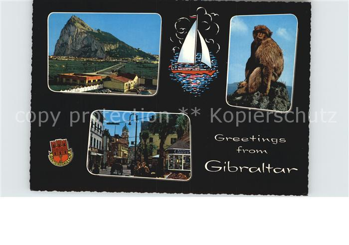 Gibraltar Felsen Affe Ortsmotiv Kat. Gibraltar