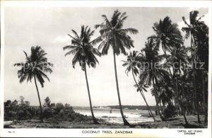 Zanzibar Kokosnusspalmen Kat. Zanzibar