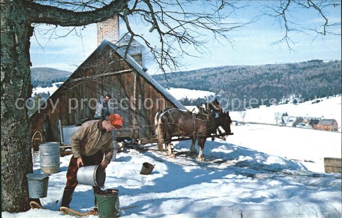 Vermont US State Maple Sugar Time Bauer Pferde im Schnee