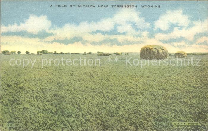 Wyoming US State Field of Alfaalfa near Torrington
