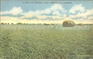 Wyoming US State Field of Alfaalfa near Torrington