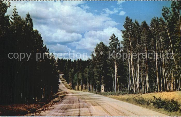 Arizona US State Kaibab National Forest