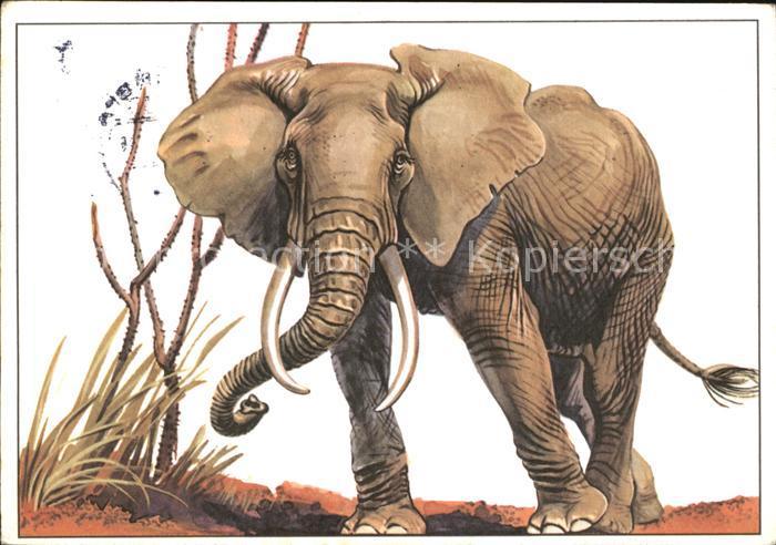 Elefant Afrikanischer Steppenelefant  Kat. Tiere
