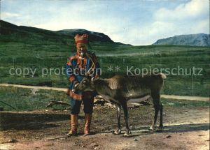 Rentier Lapp Reindeer Norway  Kat. Tiere