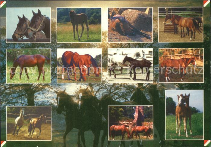 72483336 Pferde  Tiere Pferde