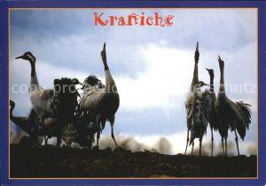 Voegel Kraniche  Kat. Tiere