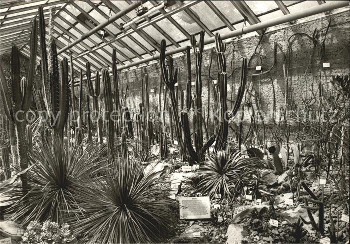 Kakteen Botanischer Garten Jena Sukkulenten Schauhaus Kat Pflanzen