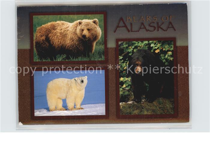 Baeren Bears of Alaska Grizzly Bear Polar Bear Black Bear Kat. Tiere