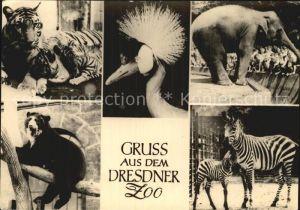 Tiere Zoo Dresden Tiger Elefant Zebra  Kat. Tiere