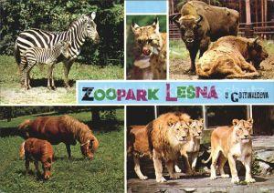 Zoo Lesna Gottwaldova Loewe Zebra Pony  Kat. Tiere