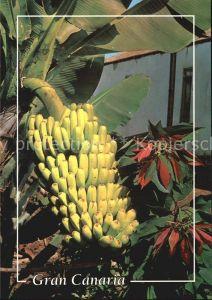 Bananen Gran Canaria  Kat. Pflanzen