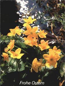 Blumen Ostern Kat. Pflanzen