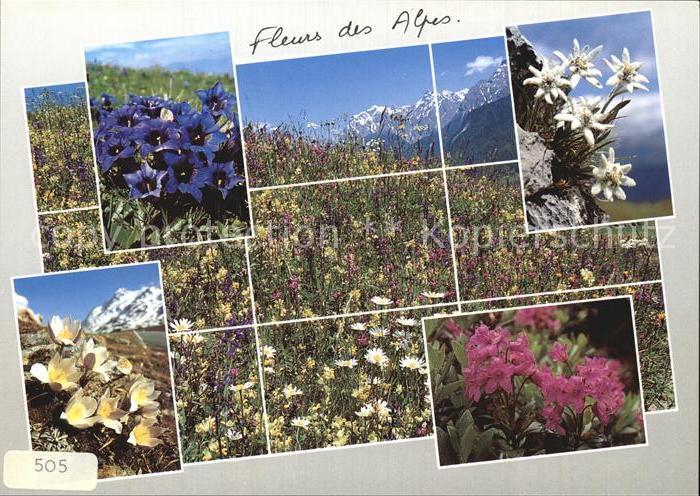 Blumen Fleurs des Alpes Enzian Edelweiss Krokus Kat. Pflanzen