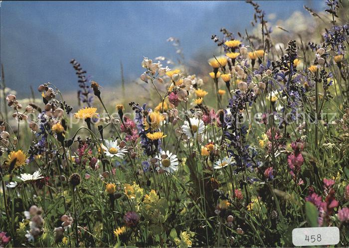 blumen wiesenblumen kat pflanzen nr kt68245 oldthing. Black Bedroom Furniture Sets. Home Design Ideas