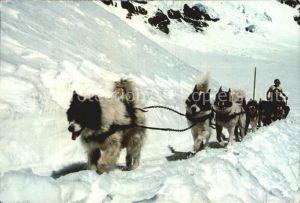 Hunde Polarhunde Jungfraujoch  Kat. Tiere
