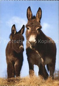 72544219 Esel Tiere Ane Donkey  Tiere Esel_Tiere