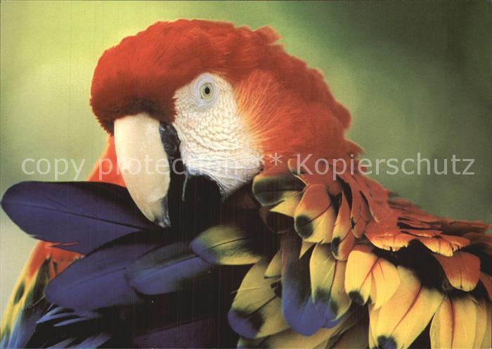 Papagei Hellroter Ara Amazonas Ara Macao WWF Kat. Tiere