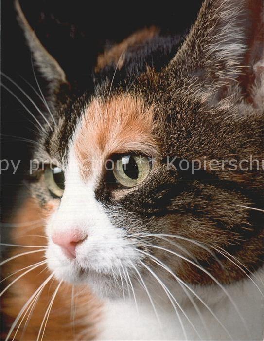 Katzen Hauskatze Kat. Tiere