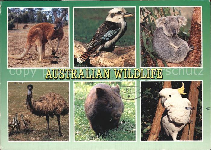 Tiere Australian Wildlife Red Kangaroo Kookaburra Koala Emu Wombat Kat. Tiere