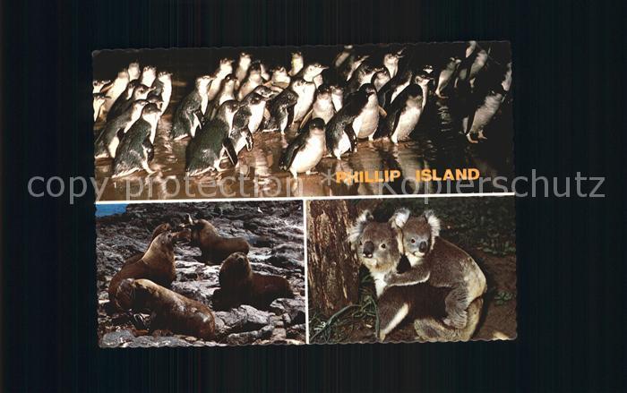 Tiere Philipp Island Victoria Australia Penguin Seal Koala  Kat. Tiere