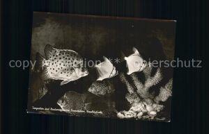 Fische Korallenfische Tiergrotten und Nordseeaquarium Bremerhaven  Kat. Tiere