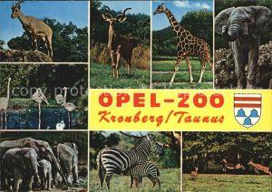 Zoo Opel Zoo Kronberg Taunus Giraffe Zebra Elefant Flamingo Kat. Tiere
