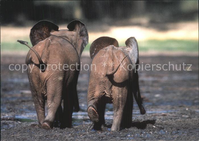 Elefant Afrikanischer Waldelefant WWF  Kat. Tiere
