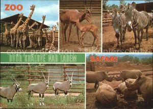 Zoo Dvur Kralove nad Labem Giraffe Zebra Nashorn  Kat. Tiere