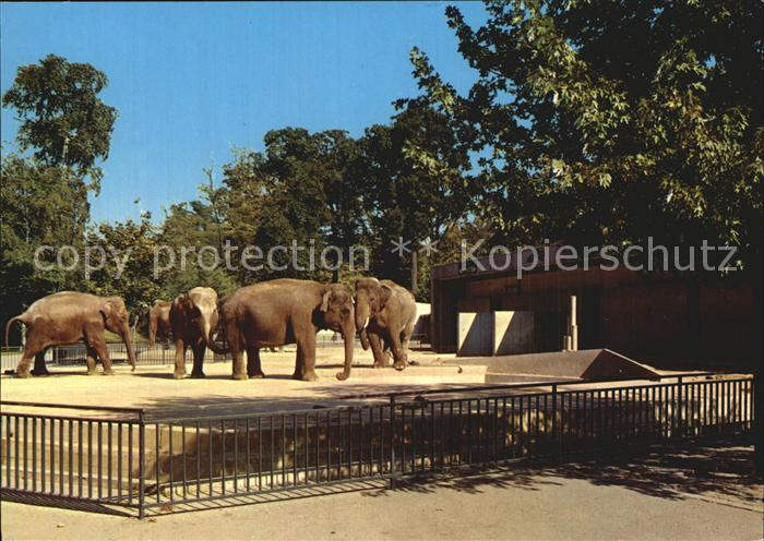 Elefant Hannover Zoo  Kat. Tiere