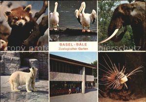 Zoo Basel Eisbaer Fisch Elefant Pelikan Kat. Tiere