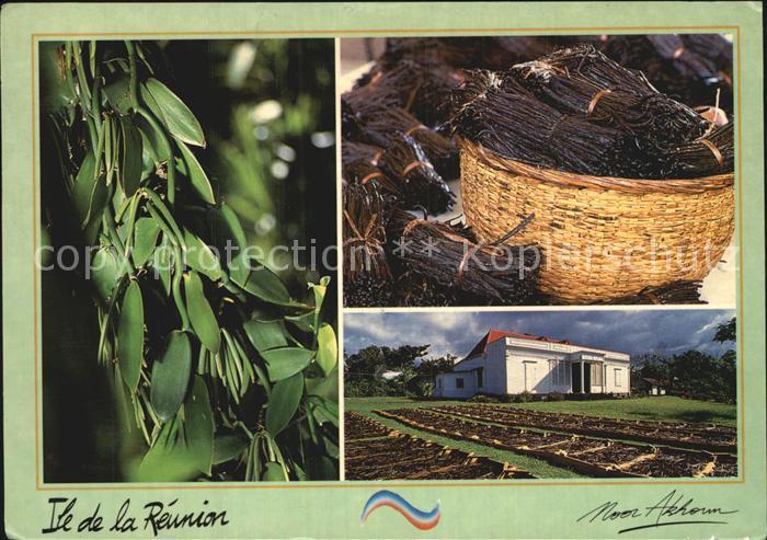 Landwirtschaft Vanille Ile de la Reunion  Kat. Landwirtschaft