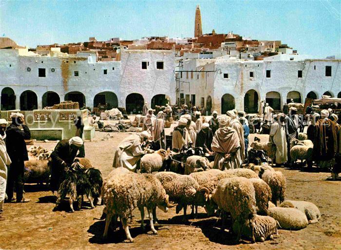 Ghardaia Markt Schafe  Kat. Algerien
