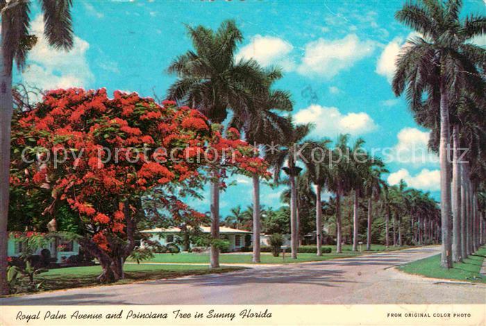 Miami Florida Royal Palm Avenue and Poinciana Tree  Kat. Miami