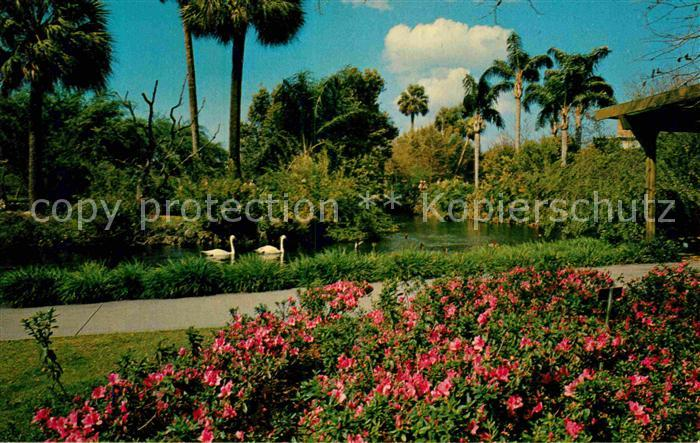 Tampa Florida Busch Gardens Kat. Tampa