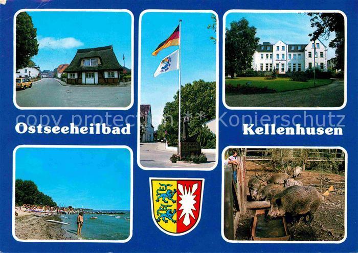 Kellenhusen Ostseebad Stradn Wildschweine Strassenpartie Kat. Kellenhusen (Ostsee)