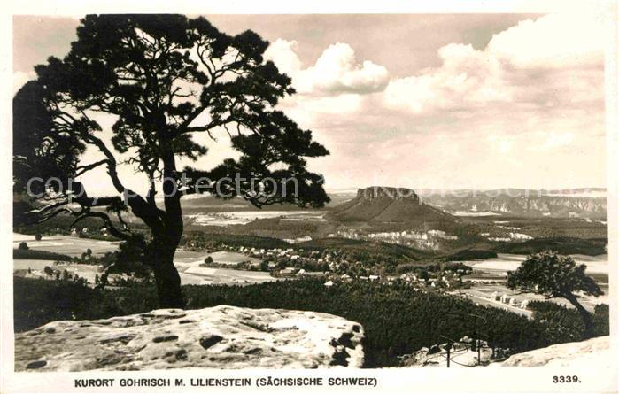 Gohrisch Panorama mit Lilienstein Tafelberg Elbsandsteingebirge Kat. Gohrisch