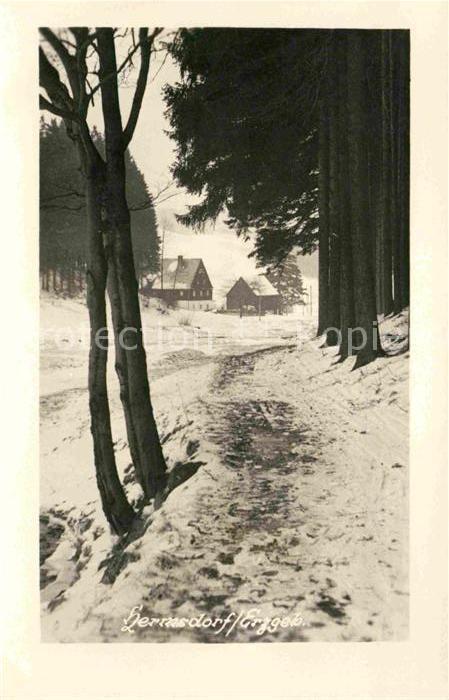 Hermsdorf Erzgebirge Partie am Waldrand im Winter Kat. Hermsdorf Osterzgebirge