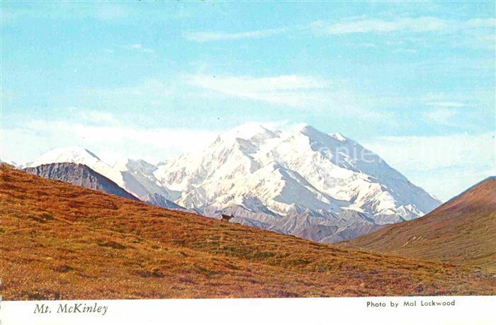 Mount McKinley Alaska showing a lone Caribou in foreground Denali National Park Kat.