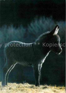 72621708 Esel Tiere Ane Donkey  Tiere Esel_Tiere