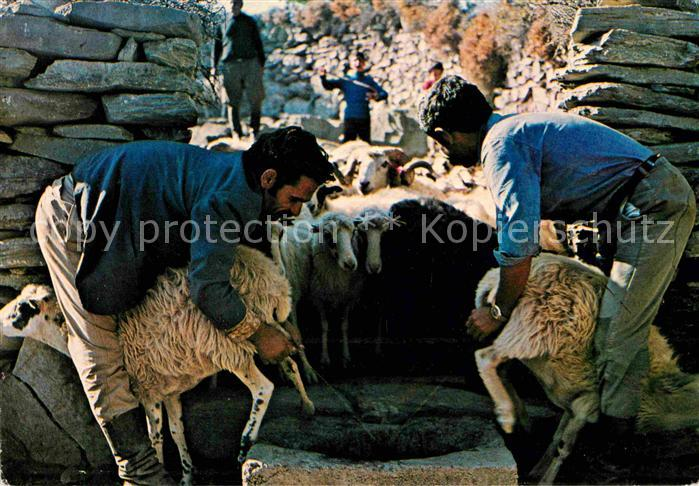 Schafe Melken Kreta  Kat. Tiere