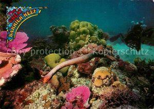 Schlangen Tiere Olive Sea Snake Barrier Reef North Queensland Australia  Kat. Tiere