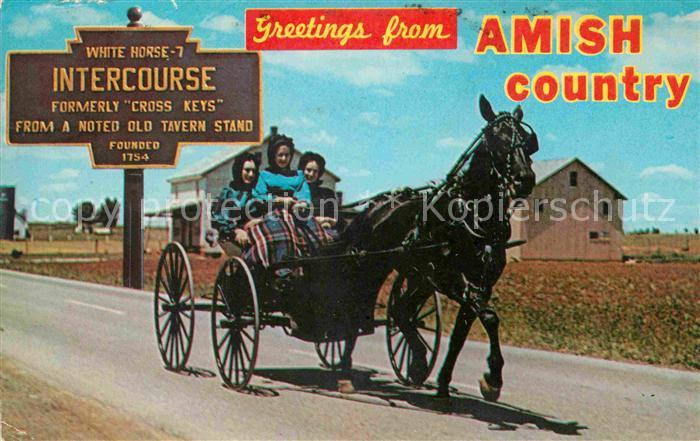 Pferdekutschen Amish Country Horse and Buggy  Kat. Tiere